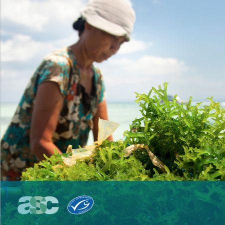 Wspólne standardy ASC i MSC dotyczące certyfikacji alg morskich