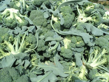 Polskie brokuły już na sklepowych półkach