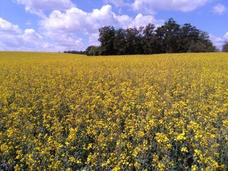 Jakie żniwa z PROW 2014-20 dla grup producentów zbóż i roślin oleistych?