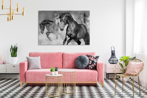 czarno biały obraz koni