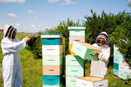 Poradnik pszczelarza. Hurtownia pszczelarska – gdzie kupić sprzęt pszczelarski?