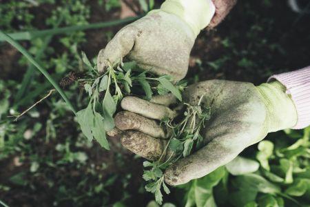 Szkodniki w ogrodzie – jak się ich skutecznie pozbyć?
