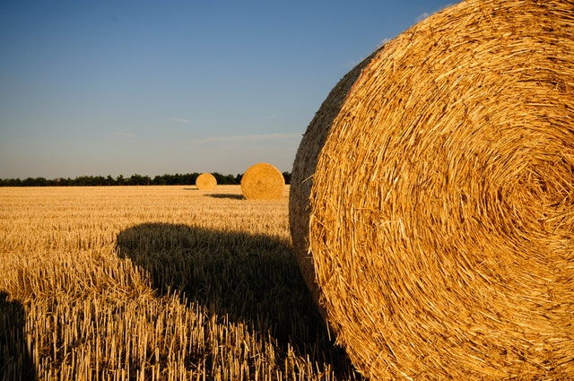 Kredyty dla rolnika – co warto wiedzieć?