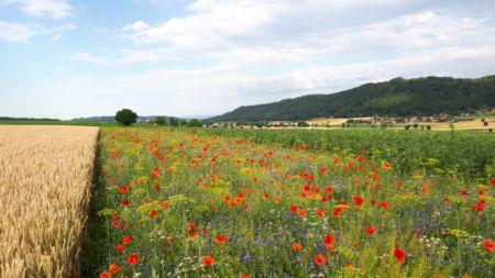 """Druga edycja konferencji naukowej """"Znaczenie pasów kwietnych w rolnictwie"""" odbędzie się Szelejewie Drugim"""