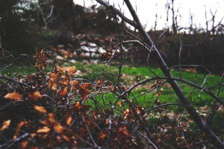 Jesienne przycinanie drzew i krzewów - 4 najważniejsze zasady