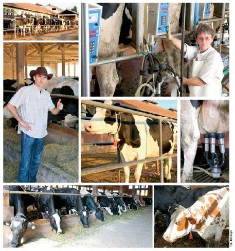 Duża produkcja  mleka - dużo pasz energetycznych