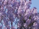 Zdjęcie 3: Oxytree. Szybko rosnace drzewo