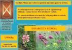 Sprzedaż nasion Esparcety siewnej