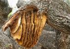 Ukraina. Miod 6 zl/kg. Pozyskujemy ziolomiody, propolis, wosk. Gospodarstwa agroturystyczne, pszczelarskie, pasieczne na sprzedaz, wynajem. Pushkari - miodowy kraj. Niskie ceny - miody wysokiej jakos